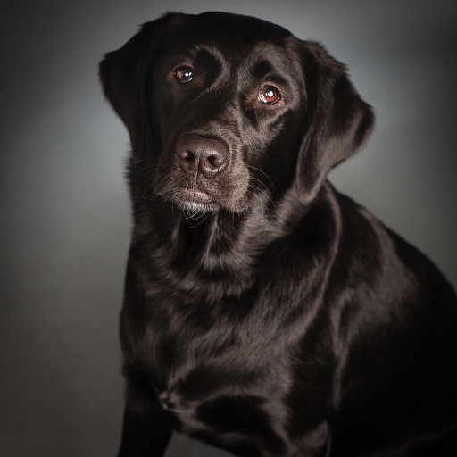 Lucy ... our Black Beauty, best friend and best dog ever.